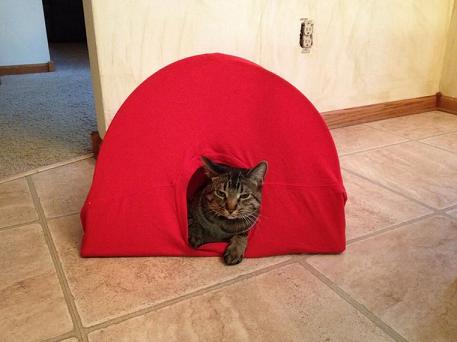 diy-cat-tent-