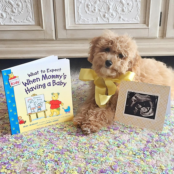 dog-pregnancy-announcement-adorable