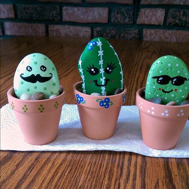 Rock Cactus Plants