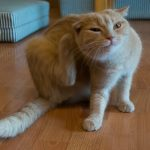 How to Get Rid of Fleas Fast in Your Home
