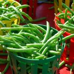 10 Vegetables to Plant Now to Enjoy in the Fall