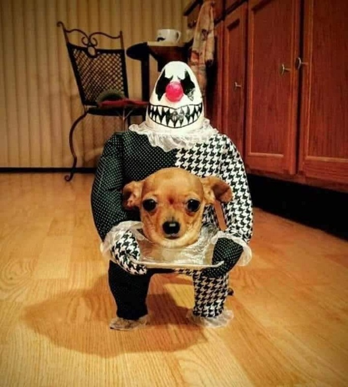 Best Homemade Dog Costumes