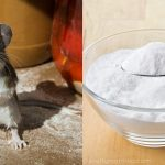 12 Clever Ways to Drive Mice and Rats Out of Your Home