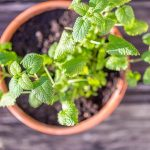 12 Plants That Attract Positive Energy and Make You Feel Happier