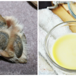 Easy 3-Ingredient All Natural Paw Balm